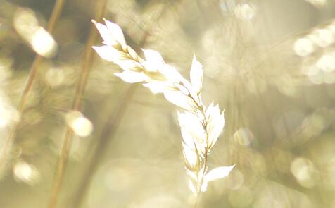 Herbstwiese im Sonnenlicht