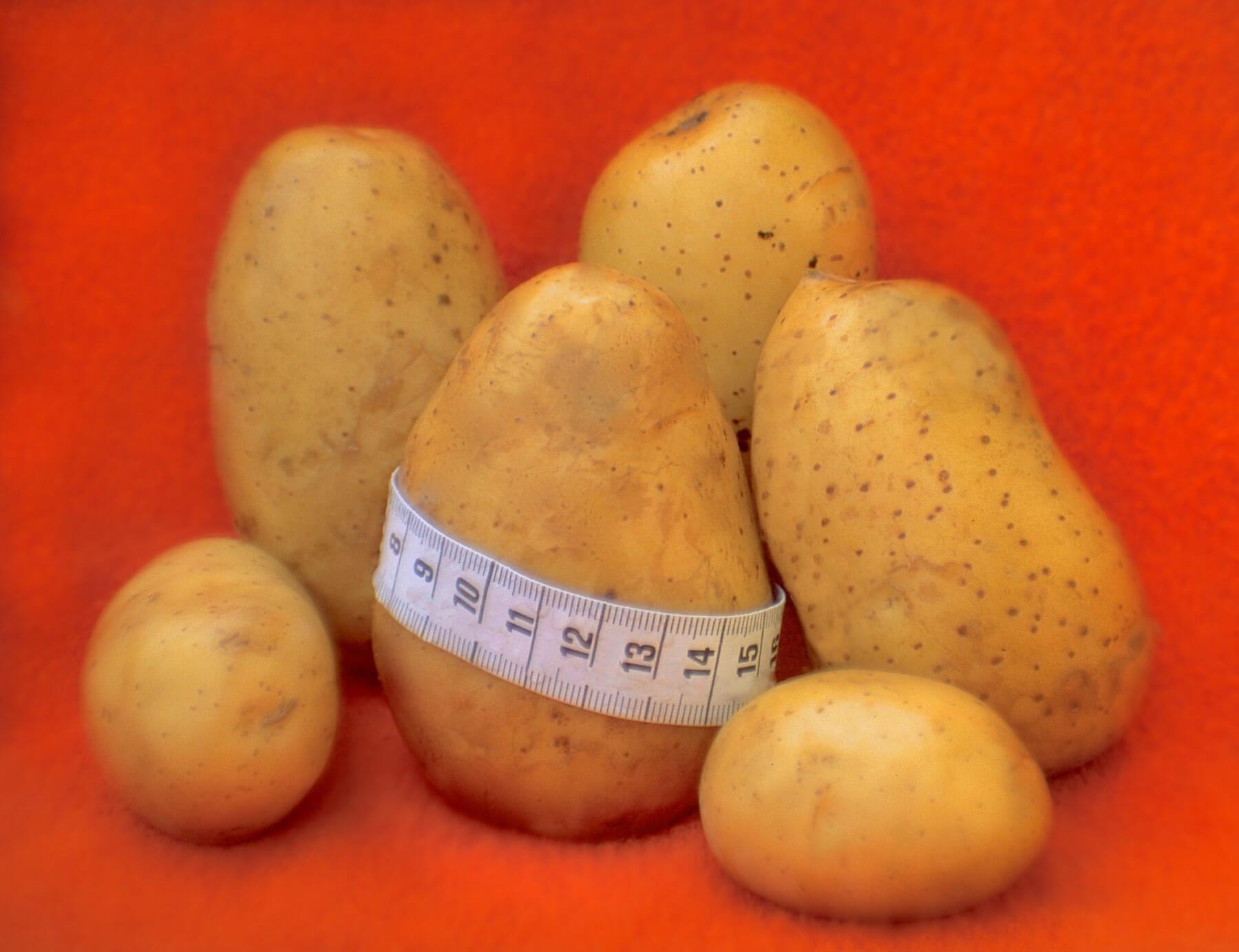 Die Kartoffelfamilie -  basische Kartoffelkur